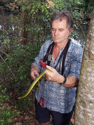 Harmless green tree snake