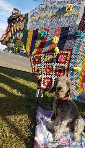 Grazing cow and dog at maleny-Knitfest