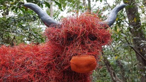 Highland cow at Sculpture on the Edge